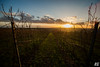 Im Wingert im Winter (Rudi G.) Tags: sun sunset sonnenuntergang weinberg abend evening gras rheinhessen rheinlandpfalz