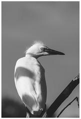 Summer Bird 2 (rmehdee) Tags: summer bird florida blackandwhite fujifilm