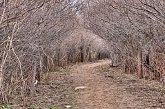 Willow Walk (Narodnie Mstiteli) Tags: willowtrees willow oxbownaturestudyarea reno nevada evenagedstand donbachman riparian marsh swamp