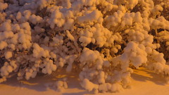 IMG_4354 (Mr Thinktank) Tags: raureif frost