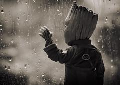 Baby Groot's Rainy Day (Jezbags) Tags: baby groots rain day groot iamgroot marvel marvelstudios guardians guardiansofthegalaxy macro macrophotography macrodreams canon canon80d 80d sepia raining sad lonely hottoys sideshow actionfigure figure raindrops window