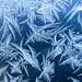 Blue Frost - Givre bleu