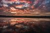 今天的夕陽 (張麗芬) Tags: taiwan 彰化縣 溪州鄉 夕陽 倒影 雲彩 風景 火燒雲 稻田