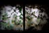 Hauntingly Beautiful (KC Mike Day) Tags: window portal leaves dead alive dark basement light shadow