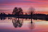 Winter Sun (Andrew G Robertson) Tags: bushy park hampton court london heron pond sunrise sunset reflection lake leg mutton