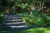 Enchanted Stairway (HSS) (buffdawgus) Tags: landscape hawaiianflora canonef24105mmf4lisusm waimeavalley lightroom6 hawaiianislands topazsw oahu waimeabotanicalpreserve oahunorthshore canon5dmarkiii hawaii waimeafallspark