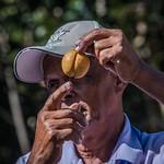 2017 - Regent Cruise - Grenada - Nutmeg & Mace thumbnail