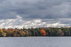 2017-10-26_11-54-44 Fall Lake (canavart) Tags: autumn princeedwardcounty ontario canada lakeontario lakeshore maple mapletree leaves fall lakeonthemountain lake