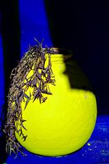 Blue & Yellow, Jardin Majorelle (Bokeh & Travel) Tags: jardin majorelle marrakech morocco blue yellow vase yves saintlaurent graden contrast beautiful colorful fashion designer abstract kingdomofmorocco