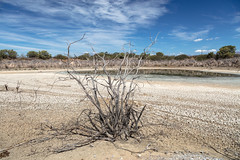 4Y4A1807 (francois f swanepoel) Tags: dam drought kwaggaskloofdam quaggaskloofdam water westerncape worcester droogte scenics landscapes