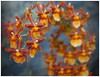 Madeira In Full Color (kurtwolf303) Tags: madeira portugal flower blossoms blüten orange colorful farbig macro natur nature olympusem1 omd microfourthirds micro43 systemcamera mirrorlesscamera mft kurtwolf303 unlimitedphotos topf25 orchidee orchid 250v10f topf50 500v20f topf75 topf100 1000v40f