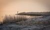 NivaaMorning (leschlypeter) Tags: winter nivaa nivå morning øresund oresund landscape dkinwinter denmark sunrise