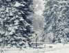 Relativizar (Agustina Santervás) Tags: agustina relativizar nieve farola banco papelera árboles secuoya lagranja