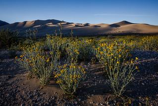 First Light: Desert in Spring