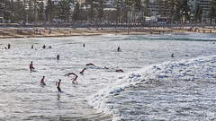 The beach (1) (geemuses) Tags: manly manlybeach nsw newsouthwales scenic scenery water ocean sea beach landscape swimmer swimmers surfers lifeguard sport extremesport sportsphotography landscapephotography northernbeaches panorama