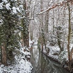 Les arbres HDR+DxOFP XT2 DSCF1131 (mich53 - thank you for your comments and 4M view) Tags: manteslaville france saisons 4winter hiver winter îledefrance 2018 xt2 xf1655mmf28rlmwr paysage nature paisible neige snow arbres trees river vaucouleurs rivière bridge