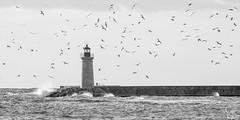 Faro-puerto de Andratx (Catarina Ginard) Tags: faro puerto de andratx mallorca