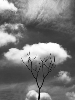 - supermarket flowers - (song by Ed Sheeran)  #abstract #cloud #progresivism #surrealism #other #freestyle #blackandwhite #blackandwhitephoto #blackandwhitephotography #bw #bwphotography #bnw #bnwphotography #monochromephotography #monochrome #iphone