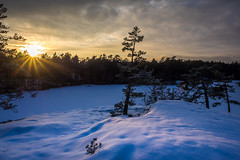 Winter Sunset (Jens Haggren) Tags: winter sunset sun landscape outdoor cold sky clouds light trees frozen snow nacka sweden olympus em1 jenshaggren