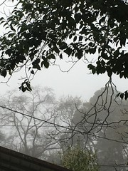 Foggy Morning In Georgia USA (Jack4Phil) Tags: trees gray fog weather