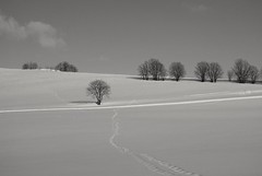 White fields (janrs7) Tags: monochrome fields winter february nordicnature norge norway trees snow sonyemount1650mm sonyilc6000 tracks minimalism