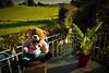7 (2) (willdrewitsh) Tags: plush plushie teddy bear stuffed toy william drewitsh tom animal