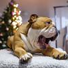 Sven Yawning (charmainesenaphotography) Tags: purple red bokeh pets animals dogs puppies sven backdrop portrait props whiskey king englishbulldog bulldogs englishbulldogs bullies
