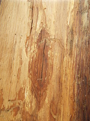 DSCF0408 (AliaGrafica) Tags: wood woods legna alberi trees countryside campagna pattern earth terra macro leaves foglie autunno autumn winter inverno