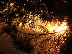 In the light of morning [Explore-2018-02-03] (Gazman_AU) Tags: sunrise sun silhouette sunlight tree golden