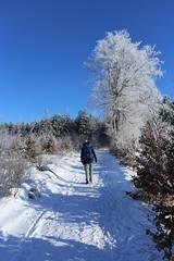 IMG_0233 (rudolf.brinkmoeller) Tags: eifel wandern natur eifelsteig hohesvenn