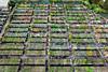 Annie's Annuals & Perennials, Richmond, California (Michael Layefsky) Tags: anniesannuals perennials nursery aerial photograph flowers vegetables fruits richmond california