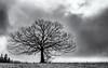Energy in my Veins... (Ody on the mount) Tags: anlässe bäume em5ii fototour hdr himmel mzuiko2518 omd olympus pflanzen schwäbischealb silhouette wolken bw clouds monochrome sw sky trees metzingen badenwürttemberg deutschland de