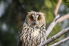 Jutro sa drugarima 😁 (Julija88) Tags: birdlifeinternacional birdlifeserbia birdlife birdwatching bird ornitology serbia srbija sombor vojvodina