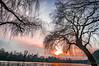 Arbre du couché, Recumbent tree (laurent.smet) Tags: couchédesoleil paysage sunset landscape