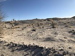 2017-12-31 GOPS Tecopa NYE (137) (MadeIn1953) Tags: 2017 201712 20171231 greatoutdoorsgo camping go gops greatoutdoorspalmspringsgops california inyocounty tecopahotsprings