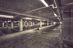 9/365  - concrete jungle (possessed2fisheye) Tags: possessed2fisheye scottmacbride scott creativeselfportrait creativephotography selfportrait self concretejungle carpark concrete 365 365project project365 2017 project3652017 365project2017 facedown facedowntuesday