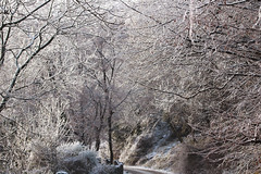 the fairy road 2 (ludi_ste) Tags: fairy snow ice trees cold winter icy road icybranches white genova genoa