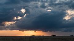 Prairie Horizon (gleavesm) Tags: florida kissimmeeprairiepreservestatepark clouds sunset