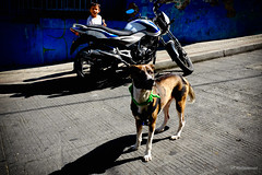 Lost (khalidhameed0110) Tags: comuna13 medellín colombia southamerica latinamerica colors colorphoto colorstreetphoto colorstreetphotography streetphotography streetphoto street streetviewphoto streetview fujifilm fujifilmx100s x100s xmount xseries dog boy kid photoman666 photography outdoor