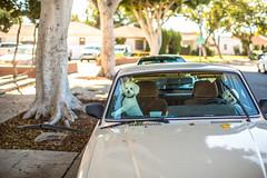 Two Cute Los Angeles Dogs (Thomas Hawk) Tags: america california losangeles southerncalifornia usa unitedstates unitedstatesofamerica volvo auto automobile car dog dogs poodle poodles fav10