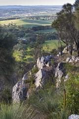 Mount Barker (Schlingshot Photography) Tags: australianfauna schlingshot tonykemp canon6d canon