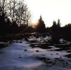 Snowy sunsets (amyg903) Tags: snowy sunsets snowysunsets sunset sun sunllight snow winter trees tree nature outdoors travel ifrane morocco africa northafrica atlas atlasmountains