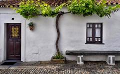 House and Tree (Jocelyn777) Tags: houses whitehouses villages whitevillages facade doorsandwindows tree cobblestones street alentejo monsaraz portugal travel