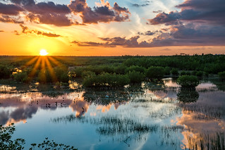 Everglades Sunset Reflected