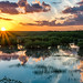 Everglades Sunset Reflected