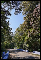 Road through forest and tea (Indianature st2i) Tags: valparai anamalais anamallais anamalaitigerreserve westernghats tea shola rainforest nature indianature 2018 january february tamilnadu india life wildlife plantation forest people estate