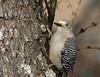 Wild Birds 19 (Largeguy1) Tags: approved wild nature bird canon 5d mark iii tamron 150 600mm