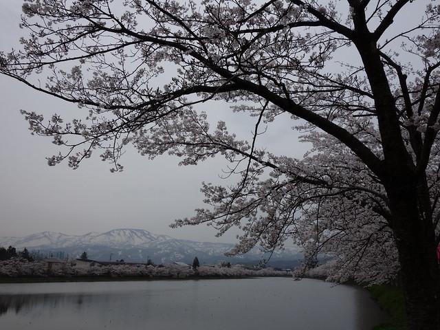 201504 高田公園@日本新潟