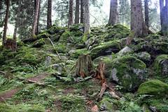Moss (CoolMcFlash) Tags: forest nature tree moss canon eos 60d grass nobody wald natur bäume baum moos gras niemand fotografie photography tamron b008 18270
