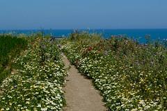 Sentiero (qoanis.27) Tags: vasto puntaaderci parco fiori sentiero path flowers